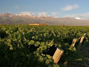 Andeluna grape vines.docx