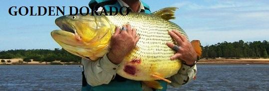 Dorado banner #1