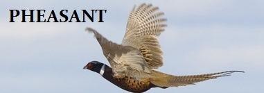 Pheasant banner #3