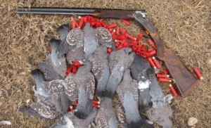 Pigeons in Argentina with shotgun LRes