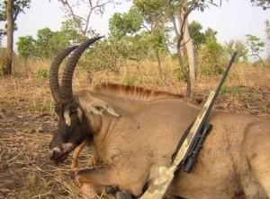 Roan Antelope Cameroun LRes